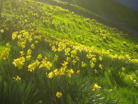 Spring in Edinburgh KapaZhao